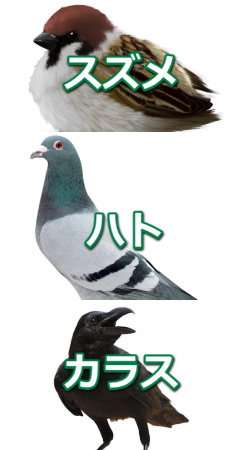 防鳥ネット(網)の用途